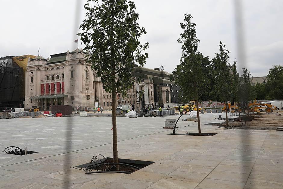 ماذا يحدث لأشجار بلغراد؟